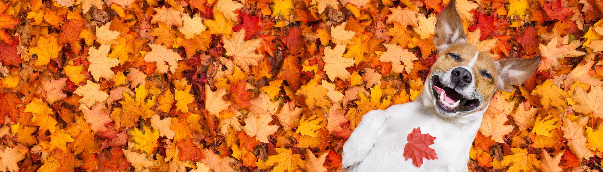 Fall Flash Sales